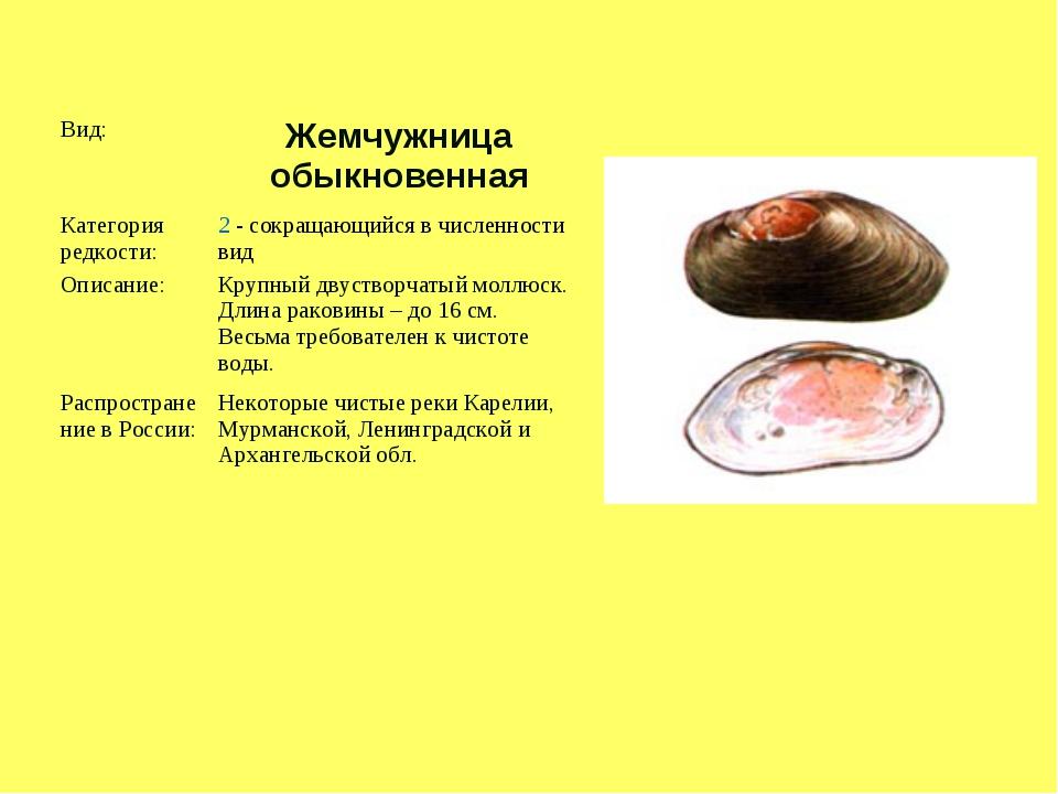 Вид: Жемчужница обыкновенная Категория редкости:2 - сокращающийся в числен...