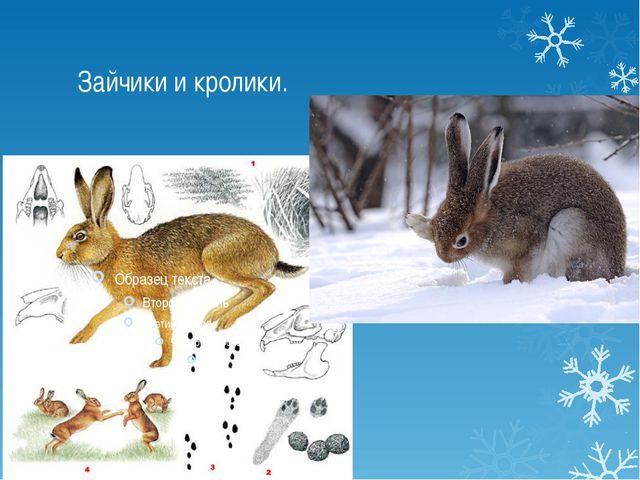 Зайчики и кролики.