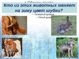 Кто из этих животных меняет на зиму цвет шубки?