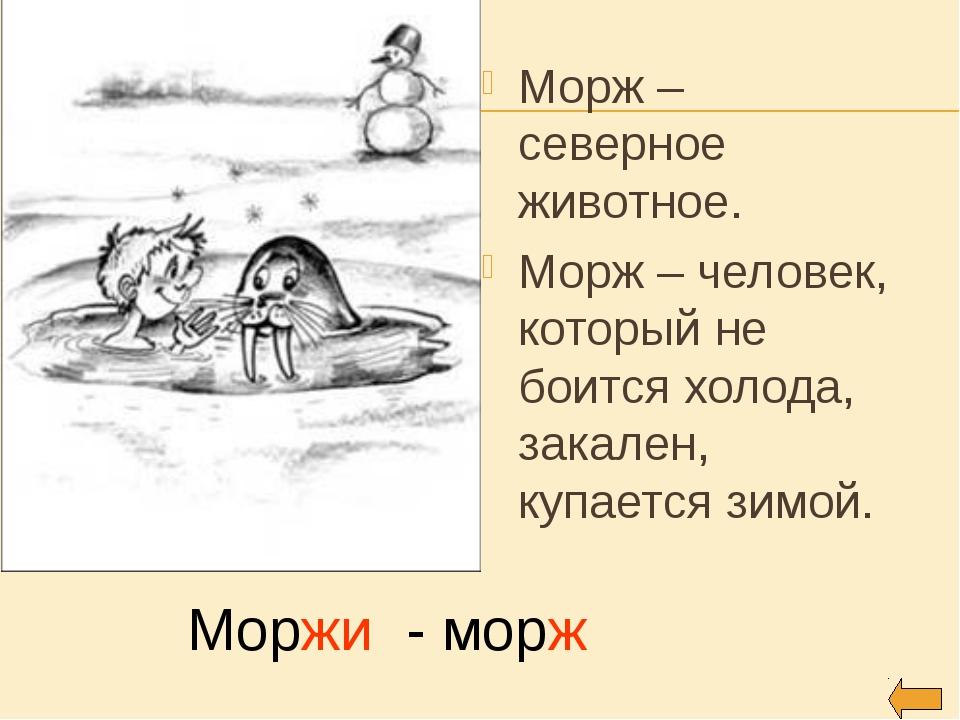 Морж – северное животное. Морж – человек, который не боится холода, закален,...