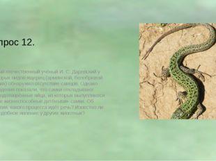 Вопрос 12. Видный отечественный учёный И. С. Даревский у некоторых видов ящер