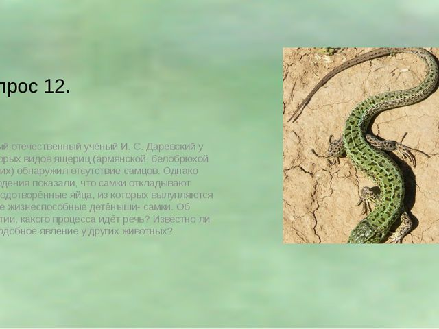 Вопрос 12. Видный отечественный учёный И. С. Даревский у некоторых видов ящер...