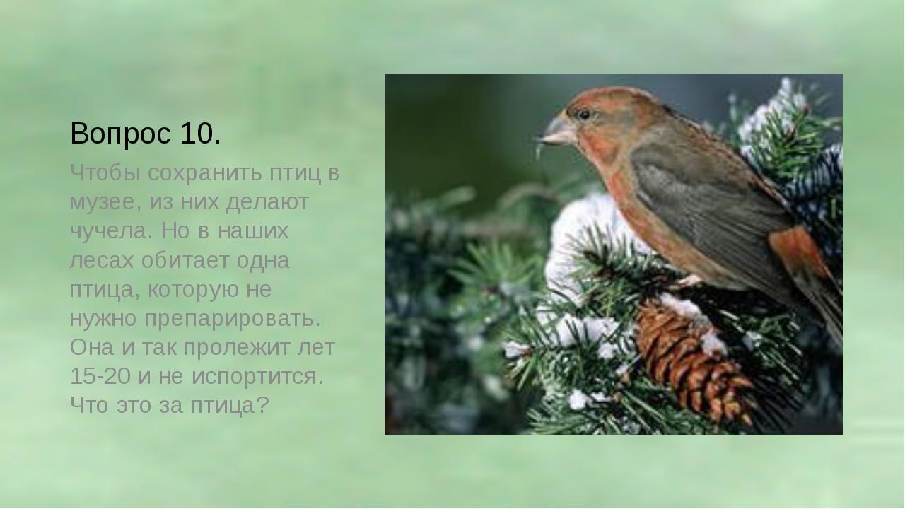 Вопрос 10. Чтобы сохранить птиц в музее, из них делают чучела. Но в наших лес...