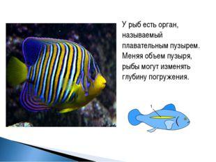 У рыб есть орган, называемый плавательным пузырем. Меняя объем пузыря, рыбы