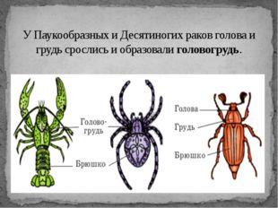 У Паукообразных и Десятиногих раков голова и грудь срослись и образовалиголо