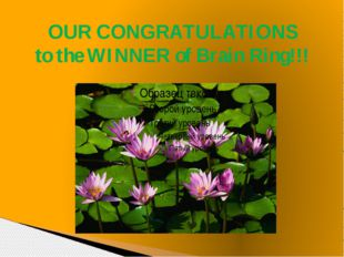 OUR CONGRATULATIONS to the WINNER of Brain Ring!!!