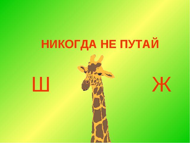 НИКОГДА НЕ ПУТАЙ Ш Ж