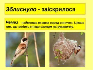 Зблиснуло - заіскрилося Ремез – найменша пташка серед синичок. Цікава тим, що