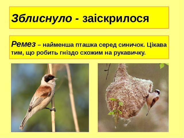 Зблиснуло - заіскрилося Ремез – найменша пташка серед синичок. Цікава тим, що...