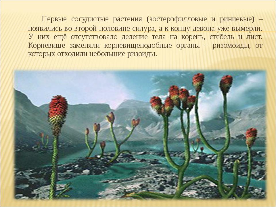 Первые сосудистые растения (зостерофилловые и риниевые) – появились во второ...