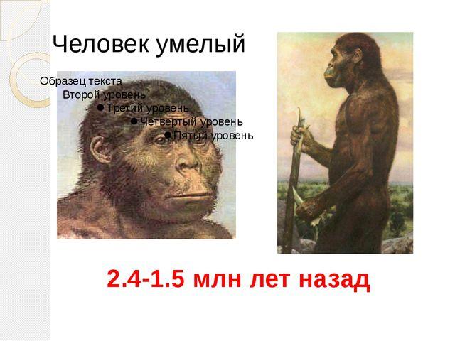 Человек умелый 2.4-1.5 млн лет назад Homo Habilis. Умели изготавливать примит...