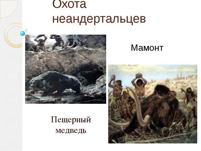 Охота неандертальцев Пещерный медведь Мамонт Умели охотиться на крупных живот...