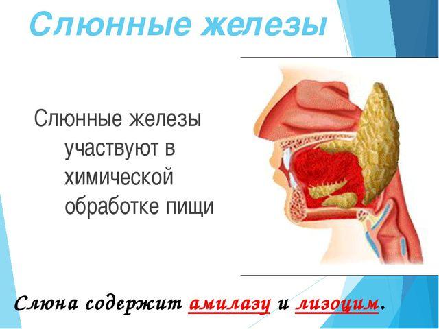 Состав и функции слюны Неорганические вещества Органические вещества 98-99%...