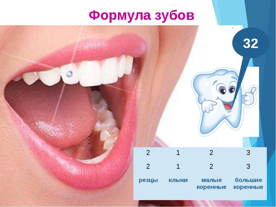 Резцы, клыки имеют по одному корню Большие коренные зубы – по 2-3 корня Корни...