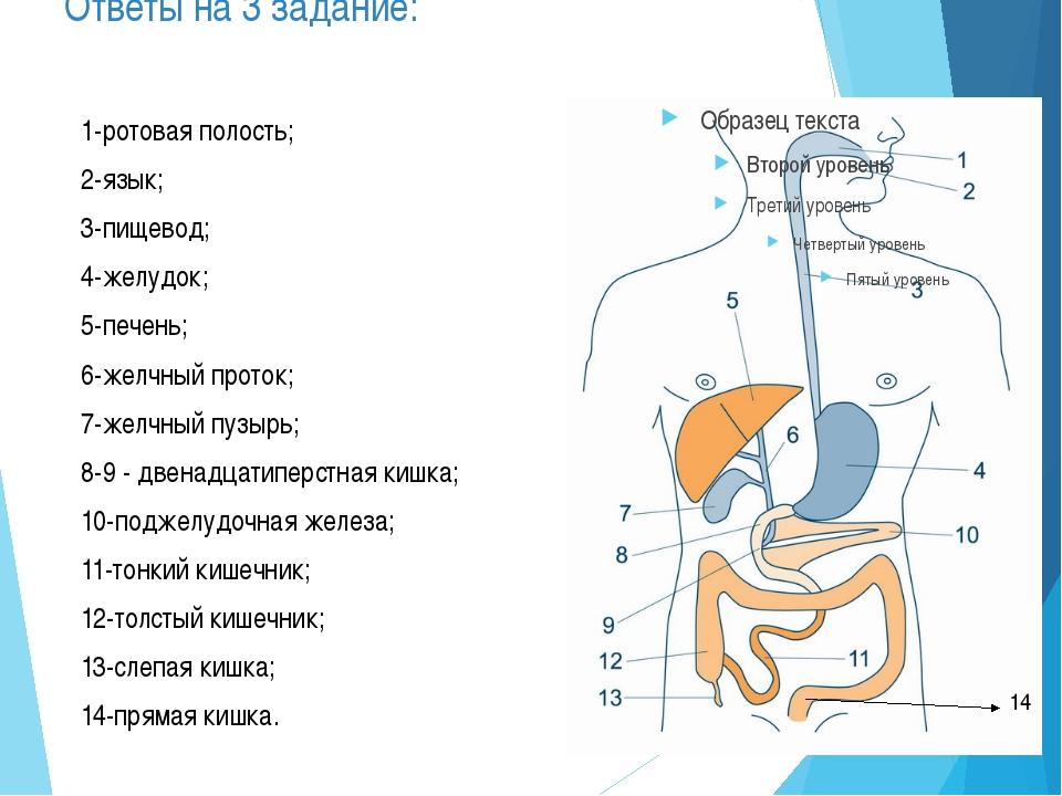 Тема урока: Пищеварение в ротовой полости . Зубы.