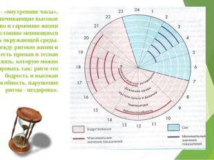 Биоритмы - «внутренние часы», обеспечивающие высокое совершенство и гармонию