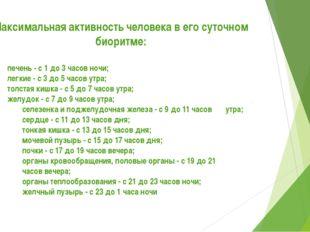 Максимальная активность человека в его суточном биоритме: •печень - с 1 до 3