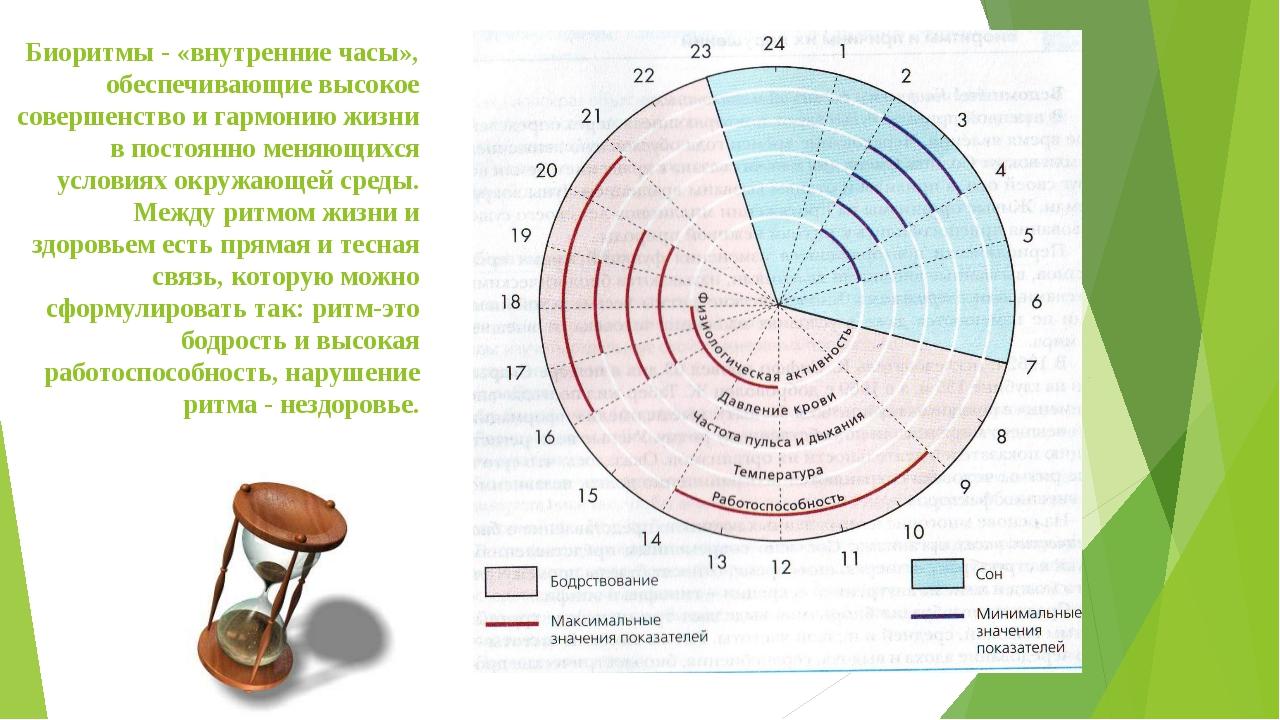 Биоритмы - «внутренние часы», обеспечивающие высокое совершенство и гармонию...