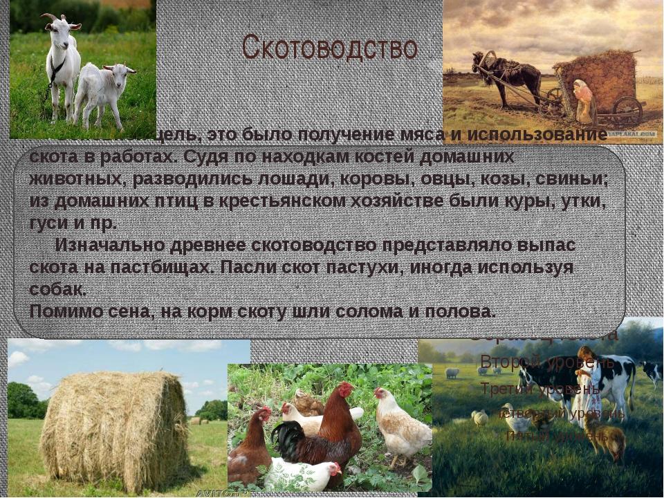 Скотоводство Основной цель, это было получение мяса и использование скота в р...