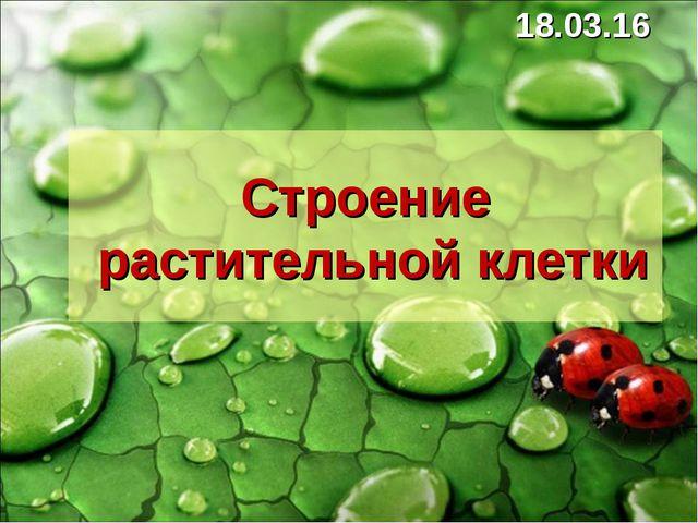 * Строение растительной клетки