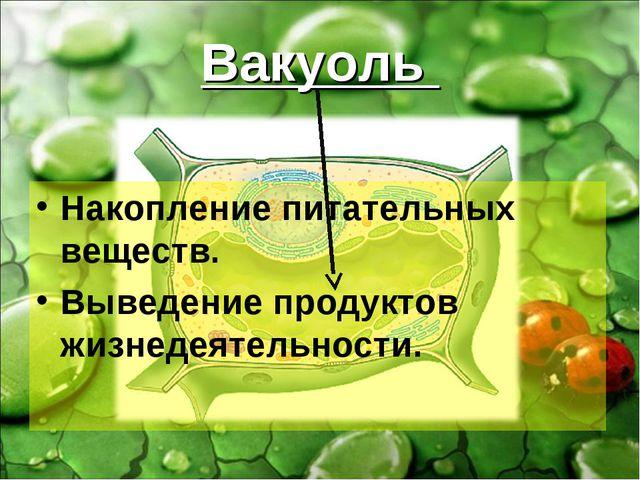 Вакуоль Накопление питательных веществ. Выведение продуктов жизнедеятельности.