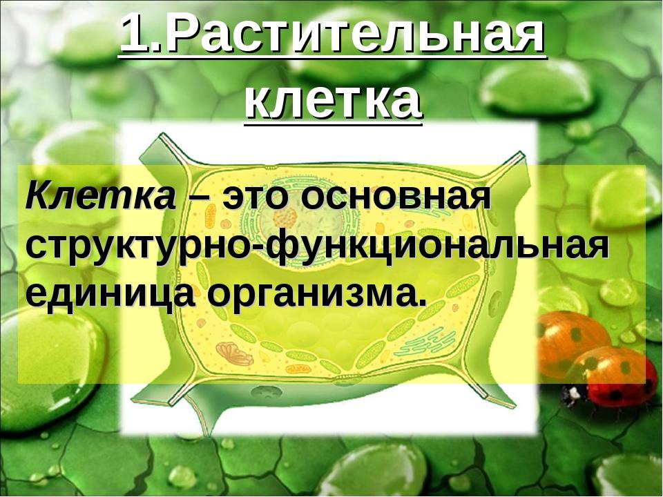 1.Растительная клетка Клетка – это основная структурно-функциональная единица...