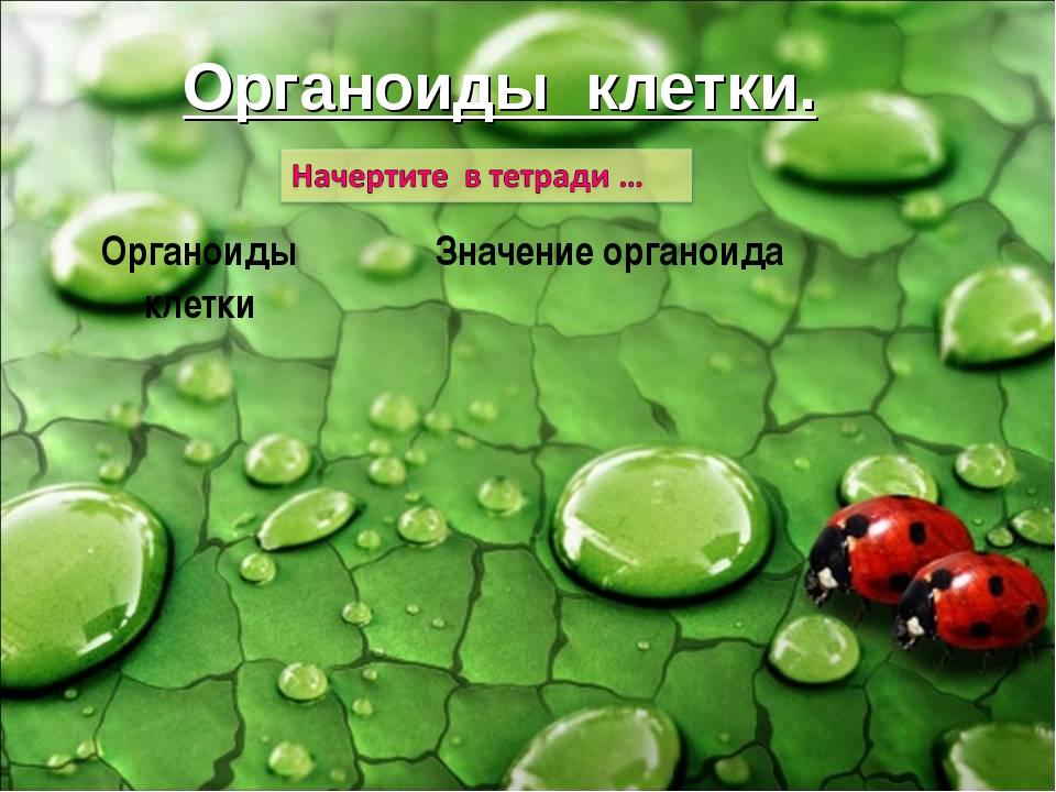 Органоиды клетки. Органоиды клеткиЗначение органоида