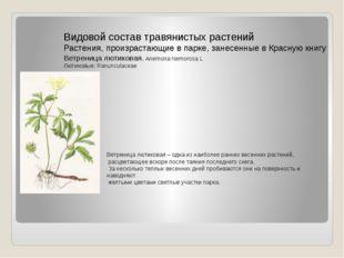 Видовой состав травянистых растений Растения, произрастающие в парке, занесен