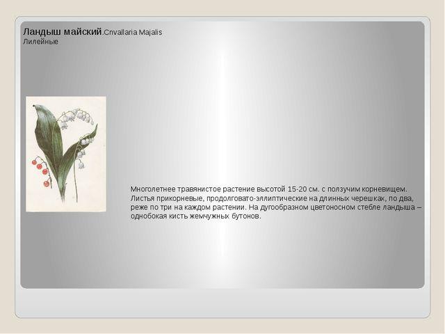 Ландыш майский.Cnvallaria Majalis Лилейные Многолетнее травянистое растение в...
