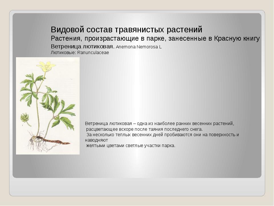 Видовой состав травянистых растений Растения, произрастающие в парке, занесен...