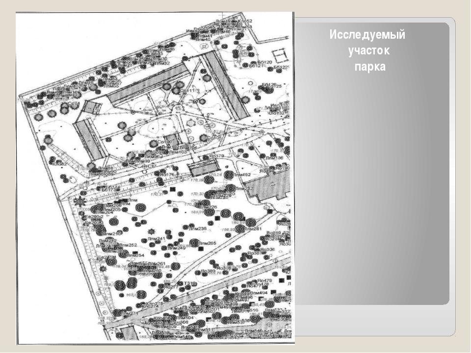 Исследуемый участок парка