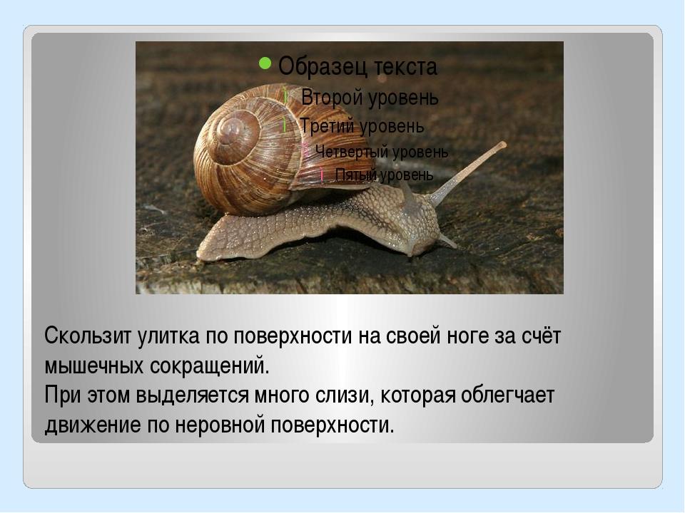 Улитки сертификация канат стальной сертификация в украине