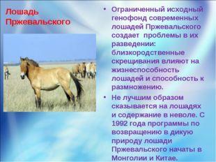 Лошадь Пржевальского Ограниченный исходный генофонд современных лошадей Пржев