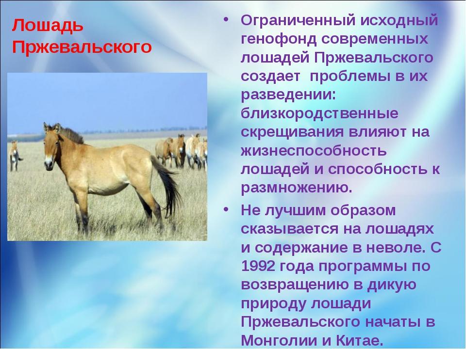 Лошадь Пржевальского Ограниченный исходный генофонд современных лошадей Пржев...