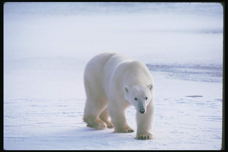 http://www.fotolov.ru/wgallery/images_large/025_bears/foto_bears_28.jpg
