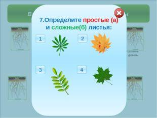 Выберите правильные ответы. 1. Определите тип корневой системы у растений: