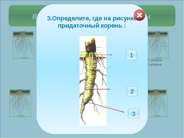 Выберите правильные ответы. 3.Определите, где на рисунке придаточный корень...
