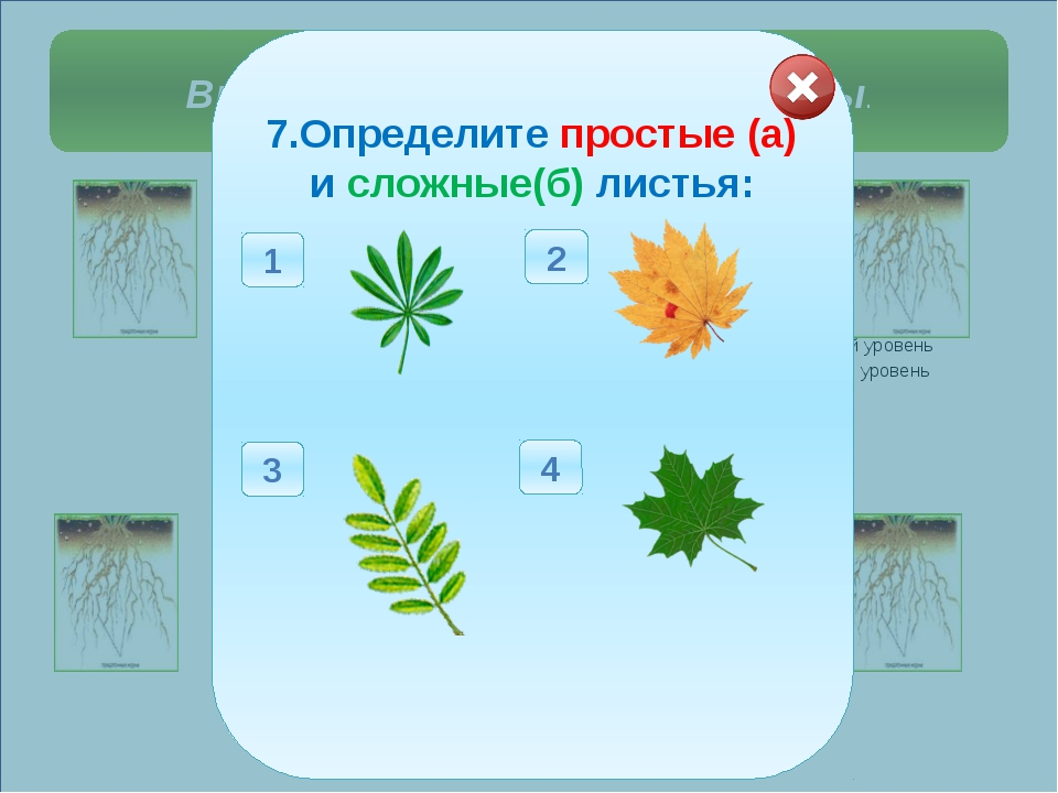 Выберите правильные ответы. 1. Определите тип корневой системы у растений:...