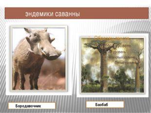 эндемики саванны Бородавочник Баобаб