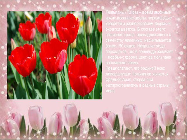 Тюльпаны (Tulipa) – всеми любимые яркие весенние цветы, поражающие красотой...