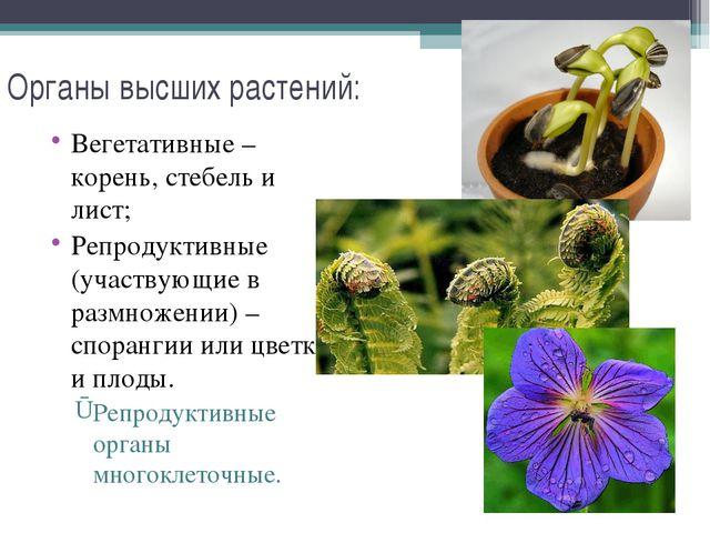 Органы высших растений: Вегетативные – корень, стебель и лист; Репродуктивные...