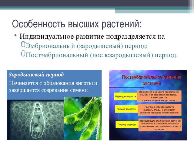 Особенность высших растений: Индивидуальное развитие подразделяется на Эмбрио...