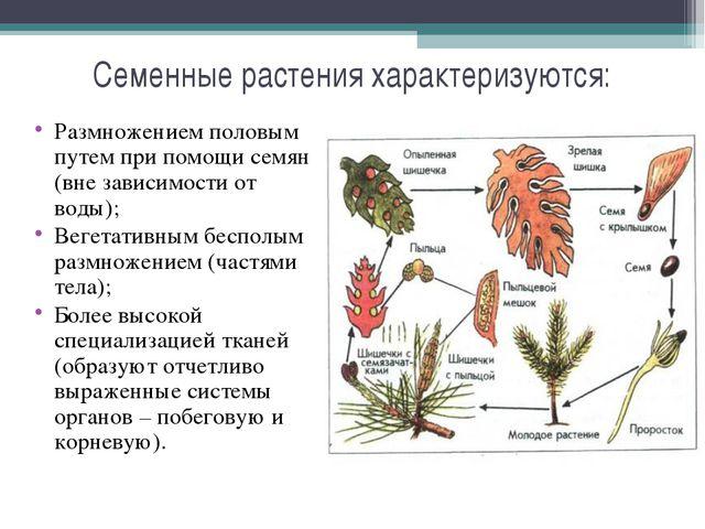 Семенные растения характеризуются: Размножением половым путем при помощи семя...