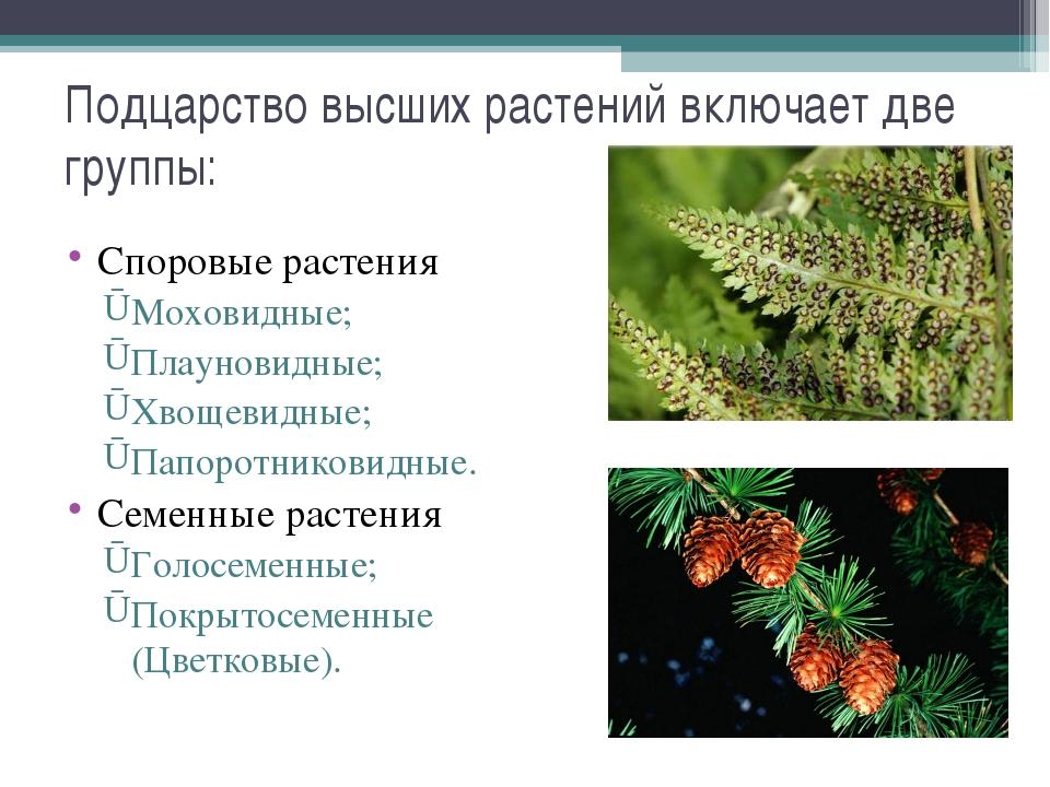 Подцарство высших растений включает две группы: Споровые растения Моховидные;...