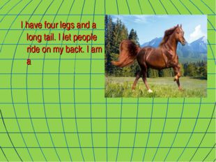 I have four legs and a long tail. I let people ride on my back. I am a