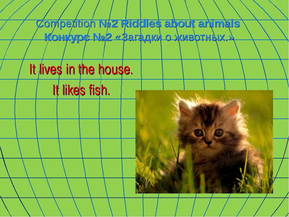 Competition №2 Riddles about animals Конкурс №2 «Загадки о животных.» It live...