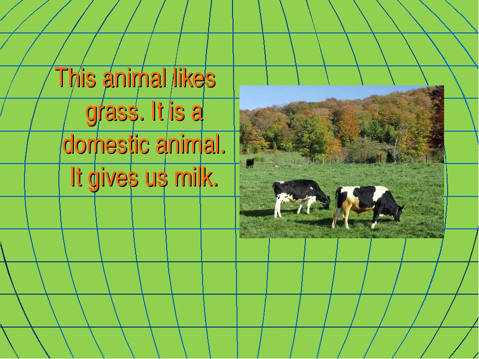 This animal likes grass. It is a domestic animal. It gives us milk.