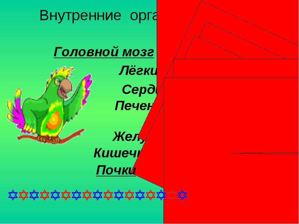 Внутренние органы человека . Головной мозг Лёгкие Сердце Печень Желудок Кишеч...