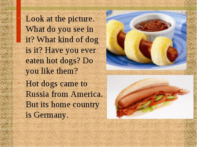 Look at the picture. What do you see in it? What kind of dog is it? Have you...