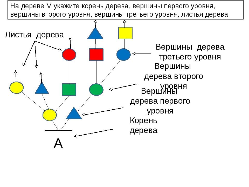 А На дереве М укажите корень дерева, вершины первого уровня, вершины второго...